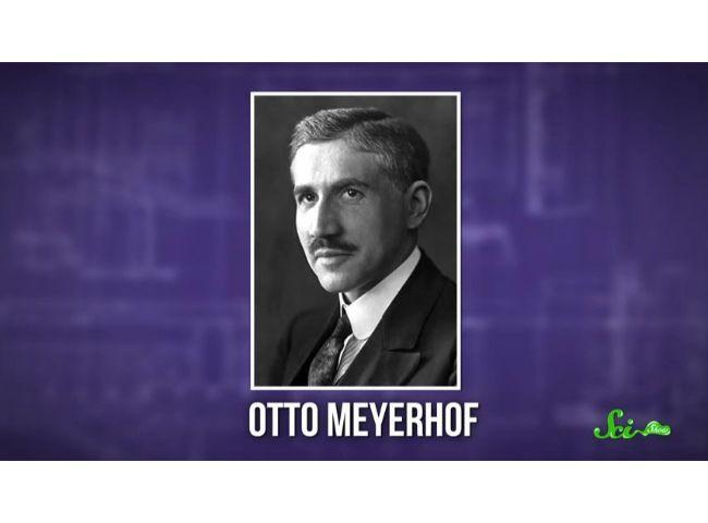 オットー・マイヤーホフ