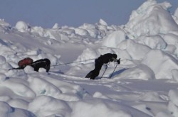 """人類史上3人目の偉業に挑戦! 北極点をめざして800km歩き続けた冒険家が見た""""生と死のリアル"""""""