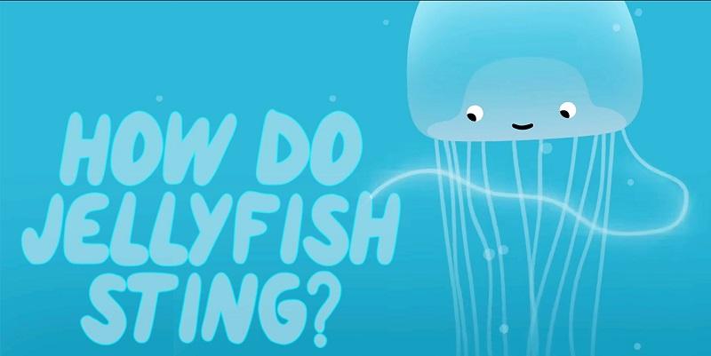クラゲに刺されたら真水で洗うのは危険 正しい対処法や毒針が働く仕組みを解説