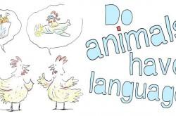 動物は言葉を使えるのか 4つのポイントで検証