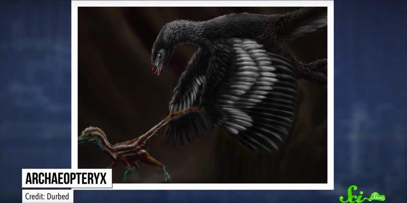 思ったよりもふっさふさ 科学の力が解明した、恐竜たちの本当の姿