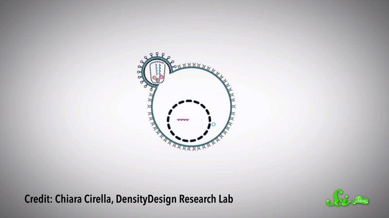 小さくて凶悪な「レトロウイルス」が、人類を救うかも?
