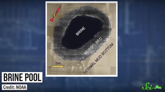 メキシコ湾の底にある「絶望のジャグジー」の不思議