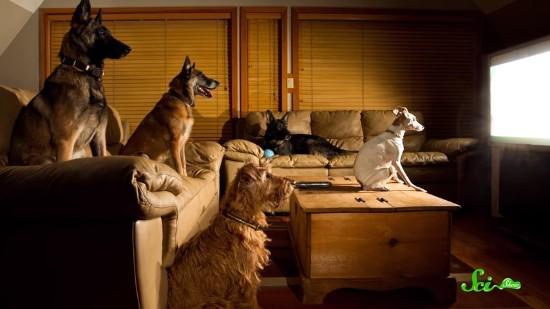 犬はテレビを見ているとき何を楽しんでいるのか?
