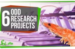 エビのランニングマシーン走行実験が世界を救う? 奇妙だけど大きな成果をもたらした研究プロジェクト