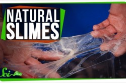 ネバネバの粘液を使って、ナメクジはどんな性交をするのか