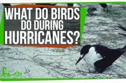 暴風雨の中を鳥たちはどう生き抜くのか?