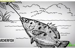 水中から射撃でエサを捕食 驚きの方法で食物を得る魚たち