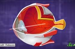 眼球を構成しているのはどんな物質?