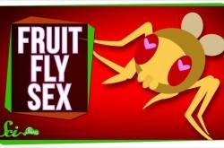 なぜ生物はセックスを好むのか? ハエの生態を観察してわかった結果