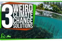 海藻や人工樹木が地球を救う? CO2削減のためのプロジェクトたち