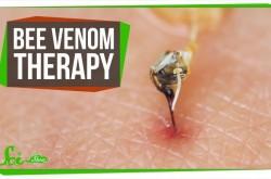 ハチの毒が関節痛に効く? 昆虫毒を用いた実験の試行錯誤