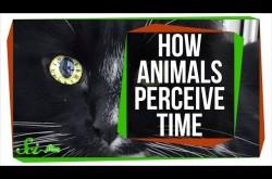 実は世界がスローモーションで見えている生き物たち