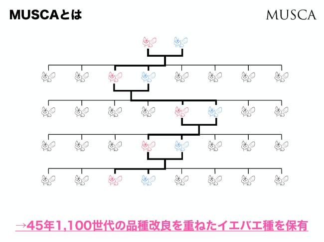 a_m (4)