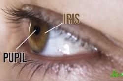 濃い色の目を持つ人は運動能力が高い? 眼球にまつわるナゾを紐解く