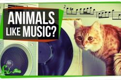 ハトはバッハを聴き分ける 動物たちに好きな音楽を選ばせた結果