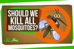 人類がすべての蚊を絶滅させたらどうなるか?