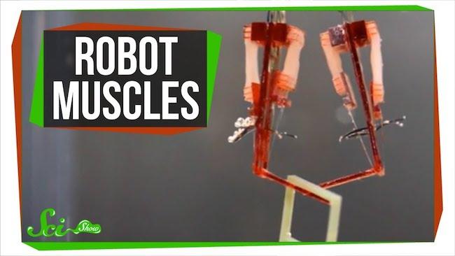 人体の謎を解明するだけでなく、病気の治療法を見つけるのにも役立つ「バイオハイブリッド・ロボット」